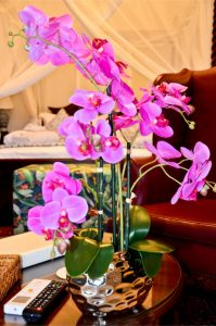 Orchids in the Suites of Shelley Point Hotel